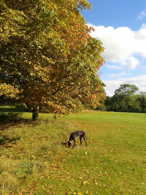 Dog walks in the autumn