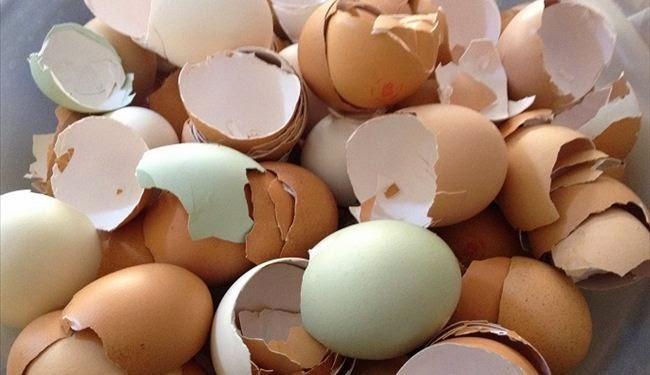 فوائد قشر البيض.. المعجزة التي لا يعلمها الناس !