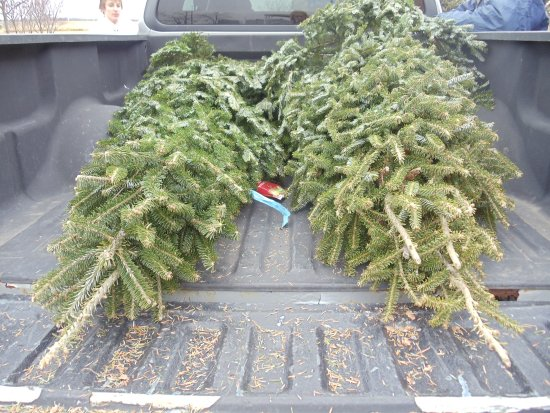 Christmas Tree in a Pick-up Truck