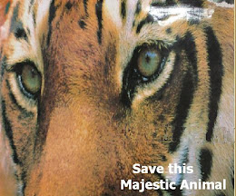 ~SAVE THIS MAJESTIC ANIMAL~