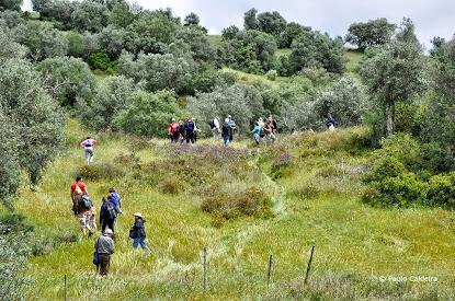 Próxima Caminhada Gratuita do Projeto Alcáçovas Outdoor Trails