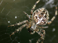 Spiders HD 14