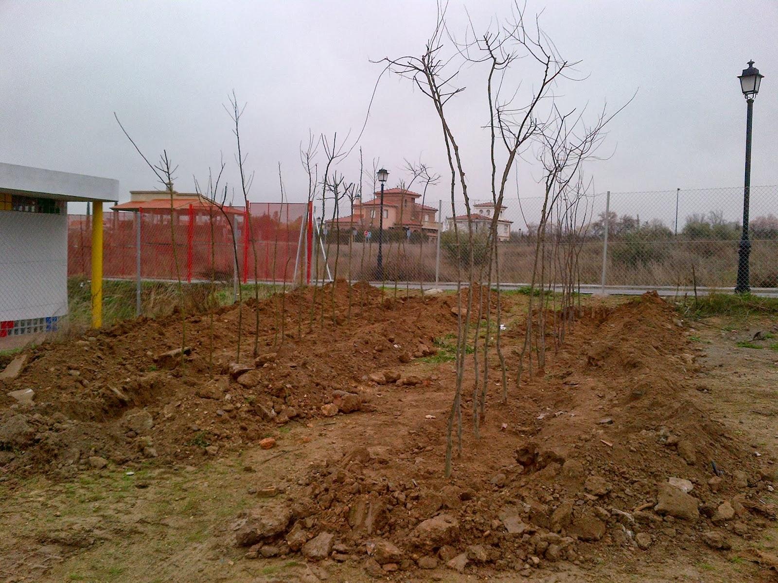 parques y jardines de ogijares proyecto vivero municipal