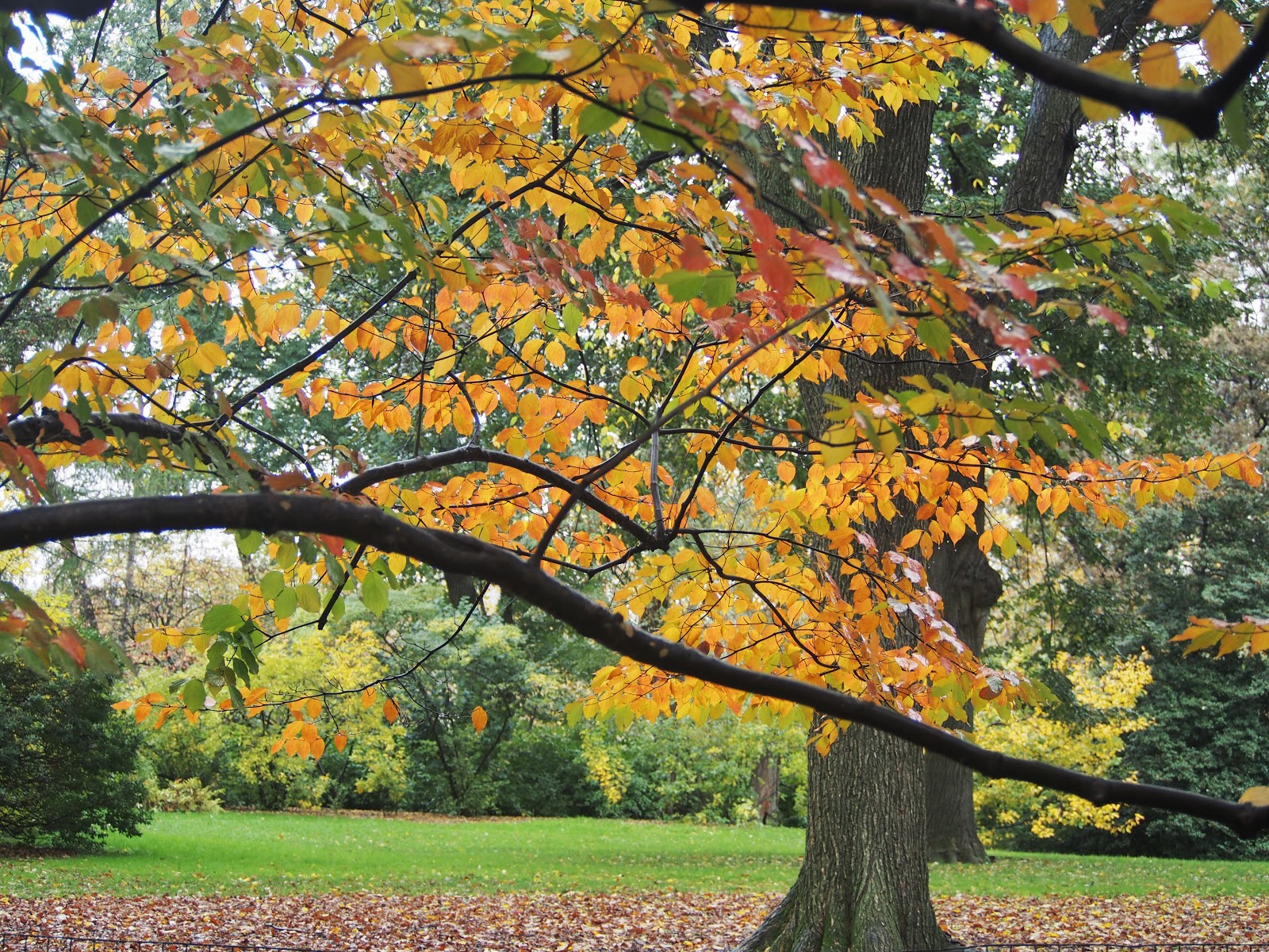 Central Park Fall, #centralparkfall  #fall #centralpark #nyc #fallincentralpark #fallinNYC 2014