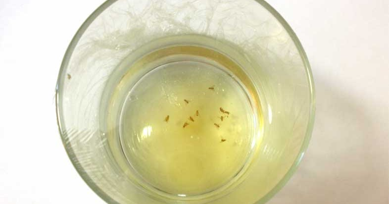 how to get rid of fruit flies home remedies