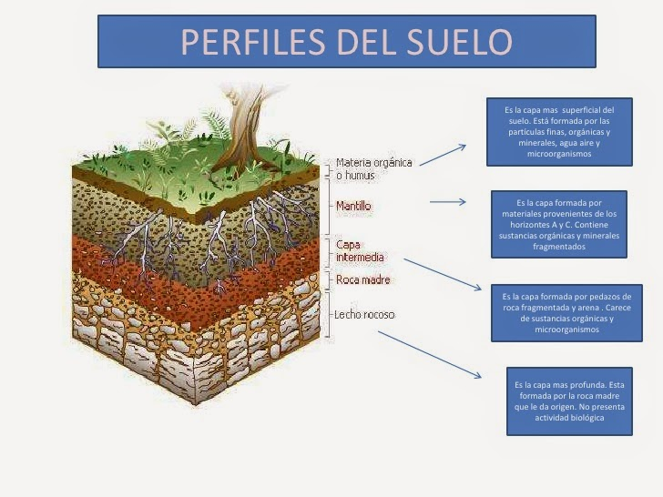 Analiza muestras de suelo de aceites y grasas comestibles for El suelo y sus capas