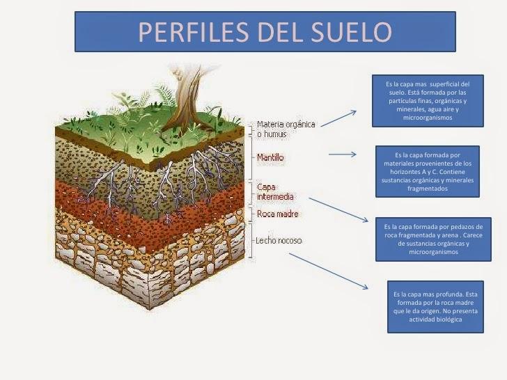 analiza muestras de suelo de aceites y grasas comestibles