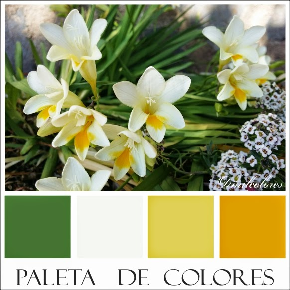 colores freesias