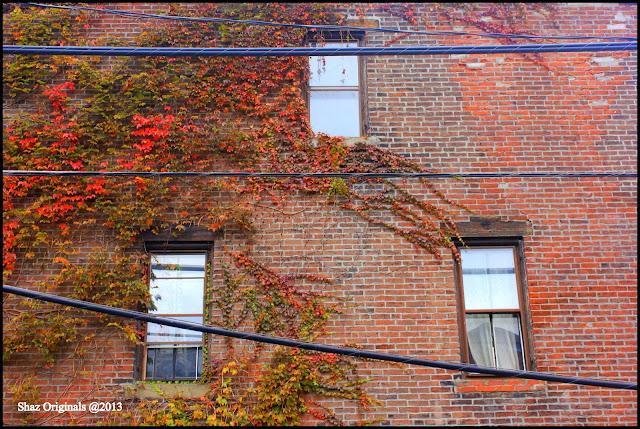 Fall Foliage Bus Tours New York