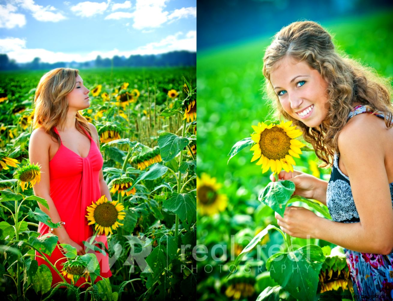Sunflower Field Photo Shoot  All HD Wallpapers