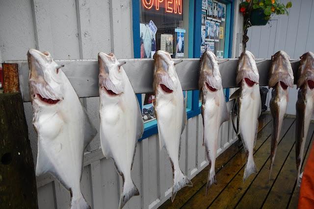 Homer Spit halibut