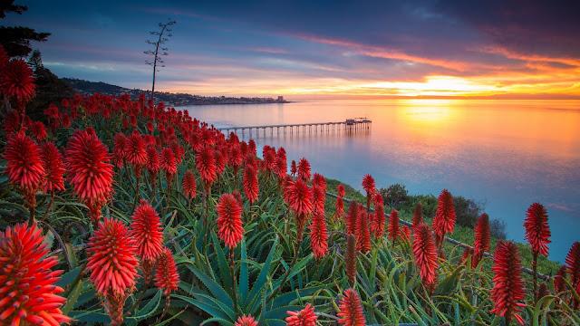 flores rojas de aloe vera agave