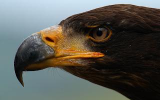 Imagni Vulturi
