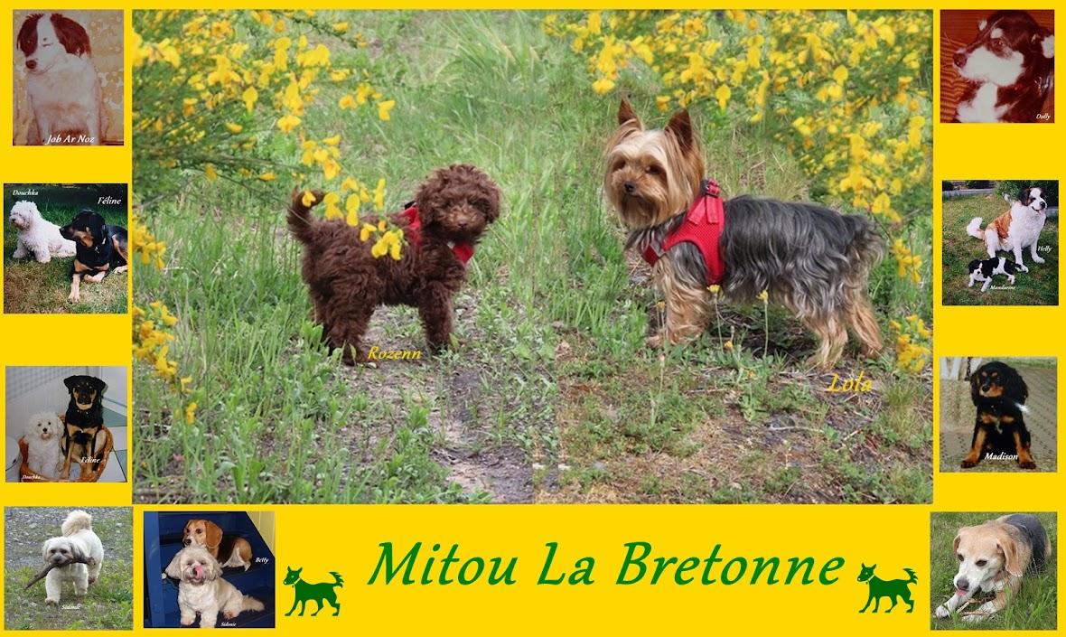 Mitou La Bretonne