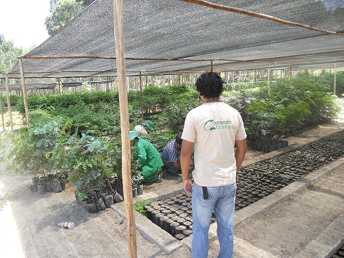 Comando ecologico municipalidad de lima serpar don 400 for Viveros en lima