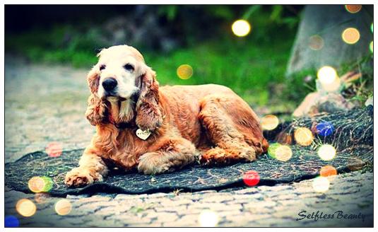 Jak pomagać bezdomnym zwierzętom