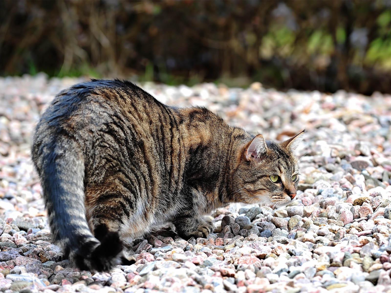 Cat Hunter Wallpapers - Salon des Refusés