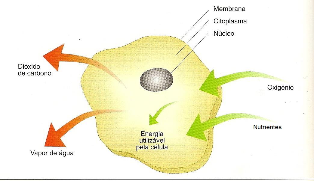 Mecanismos de formação de inclinação de fumo