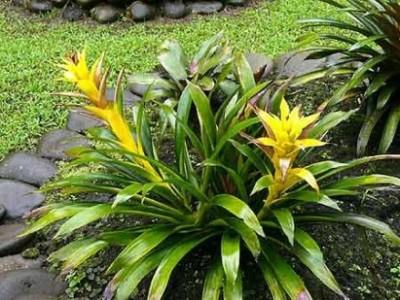 Flores e jardins plantas jardinagem e paisagismo saiba for Plantas de terraza resistentes