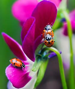 """Spring """"LadyBugs"""""""