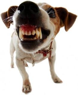 puppies Por que o Comportamento Agressivo do Cão