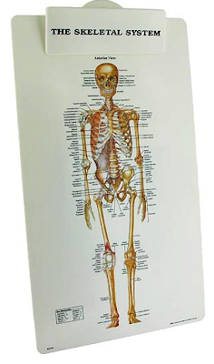 skeletal system clipboard