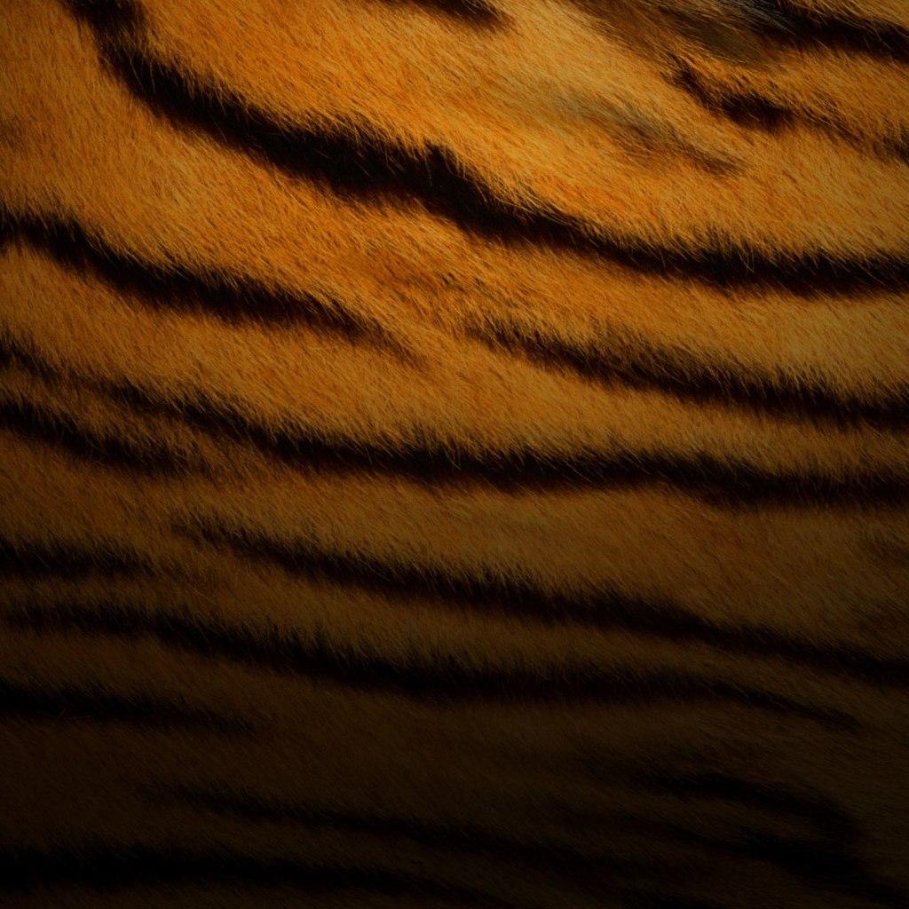 http://3.bp.blogspot.com/-NnShITixHgA/T2QyPnl2v9I/AAAAAAAAAiA/AiBu_SyiQxQ/s1600/free-ipad-wallpapers-Tiger-skin.jpg