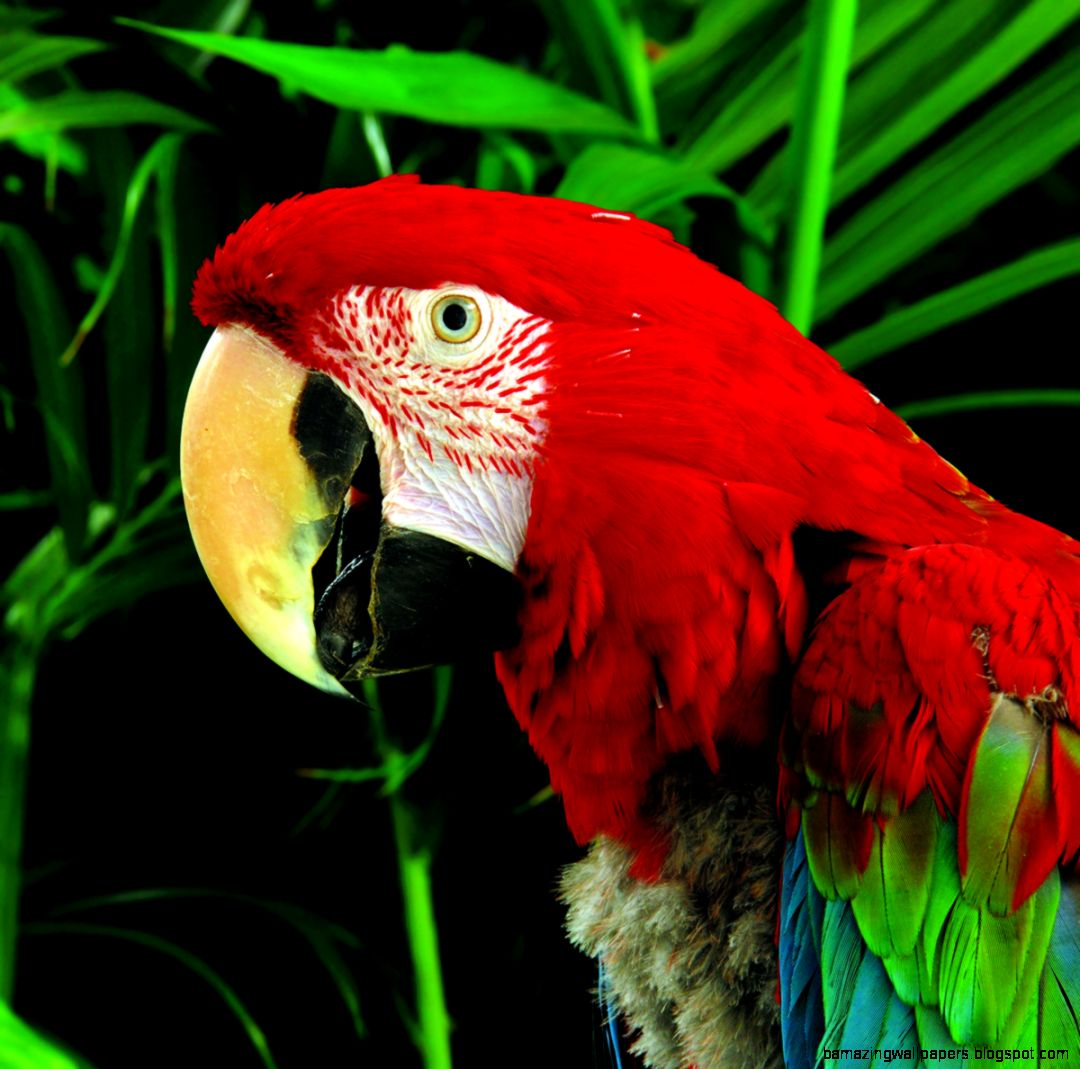 Rainforest Animals And Plants Facts