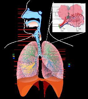 nursing care plan for bronchitis pdf