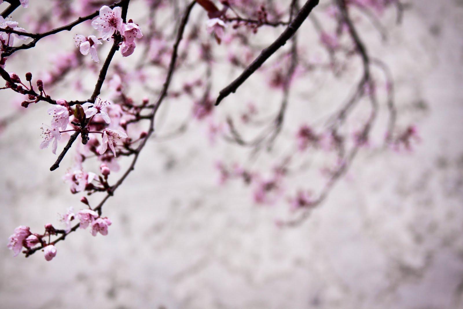 PEECTUREZZ Sakura Flowers