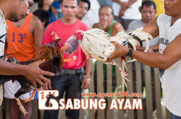 Hasil Pertandingan Arena AR2 Sabung Ayam S1228.net 09 November 2015