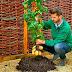 TomTato.- La planta para cultivar en Marte, produce tomates y patatas a la vez