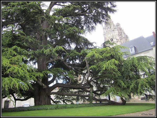 Cour du Musée des Beaux Arts grand arbre marocain
