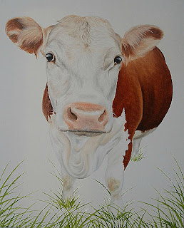 Pet Portrait Hereford Cow Cattle Oil Painting on canvas