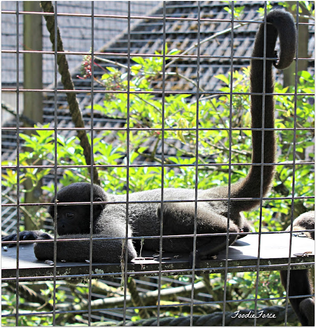 The Monkey Sanctuary Looe