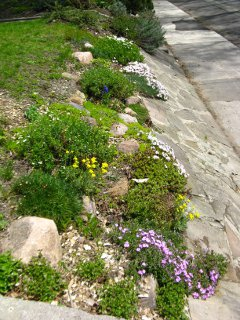 Strathcona Ave. front rock garden after by Paul Jung Gardening Services Toronto