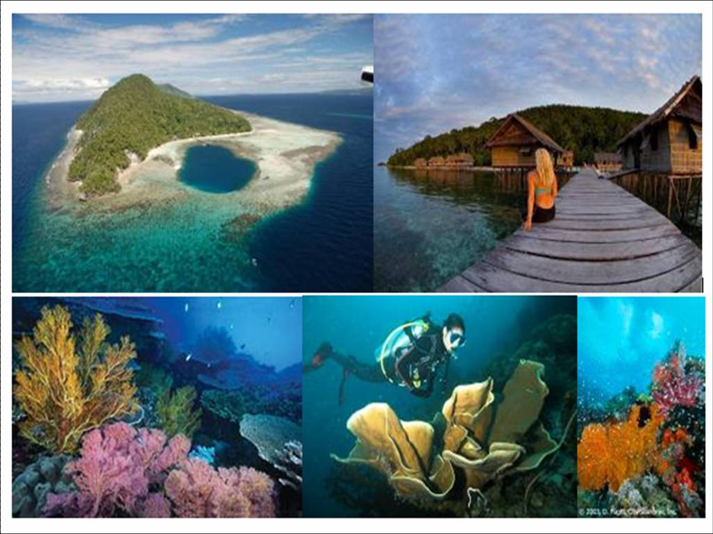 "Raja Ampat Diving ""PAPUA"" 