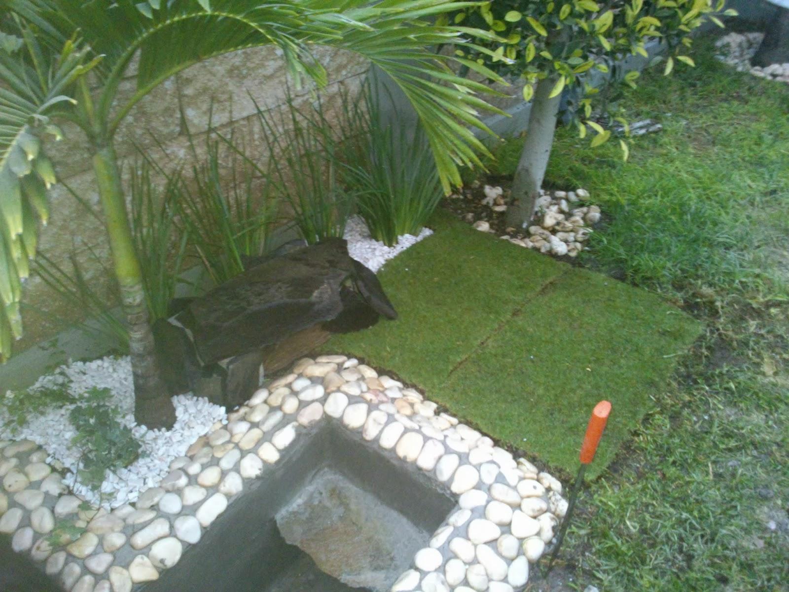 El estanque de mis tortugas noviembre 2013 - Como construir un estanque para tortugas ...