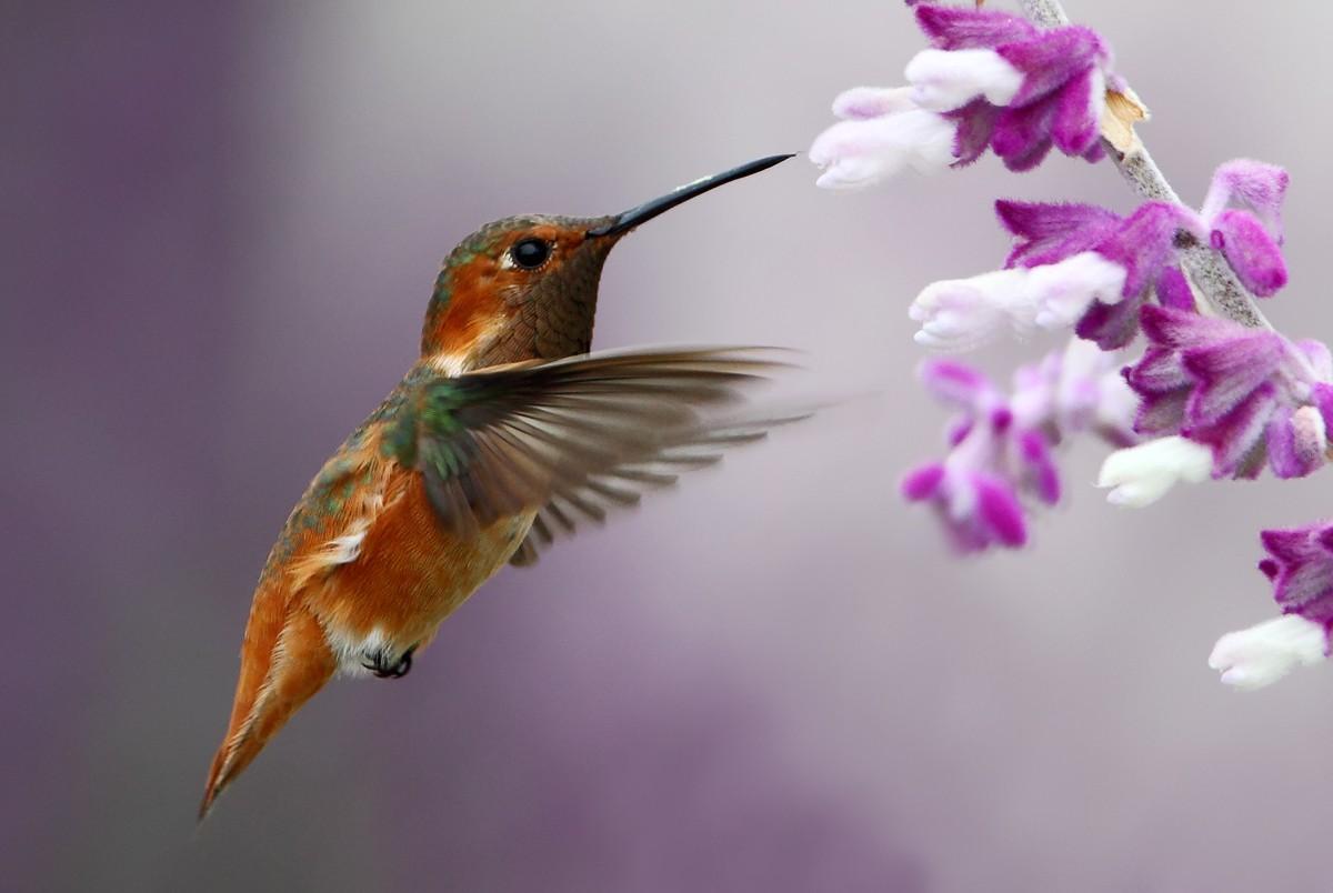 Beautiful Birds Photography