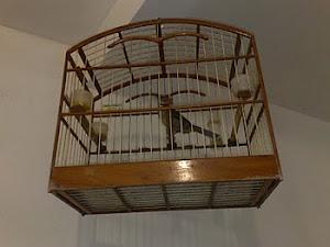 Ouça o meu Pássaro
