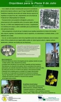 """Proyecto """"Orquídeas para la plaza 9 de Julio de Avellaneda"""""""