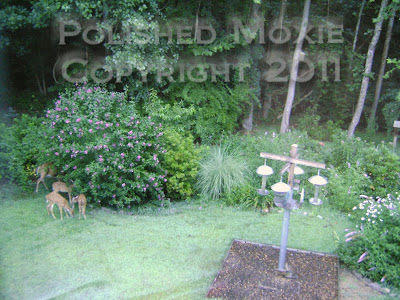 Picture of mama deer and her three fawns having a meal on my rose of sharon bush
