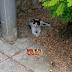 Γάτος με... τρόπους χαρίζεται!