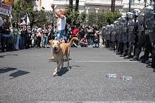 Así se las gastan los perros libres de Atenas