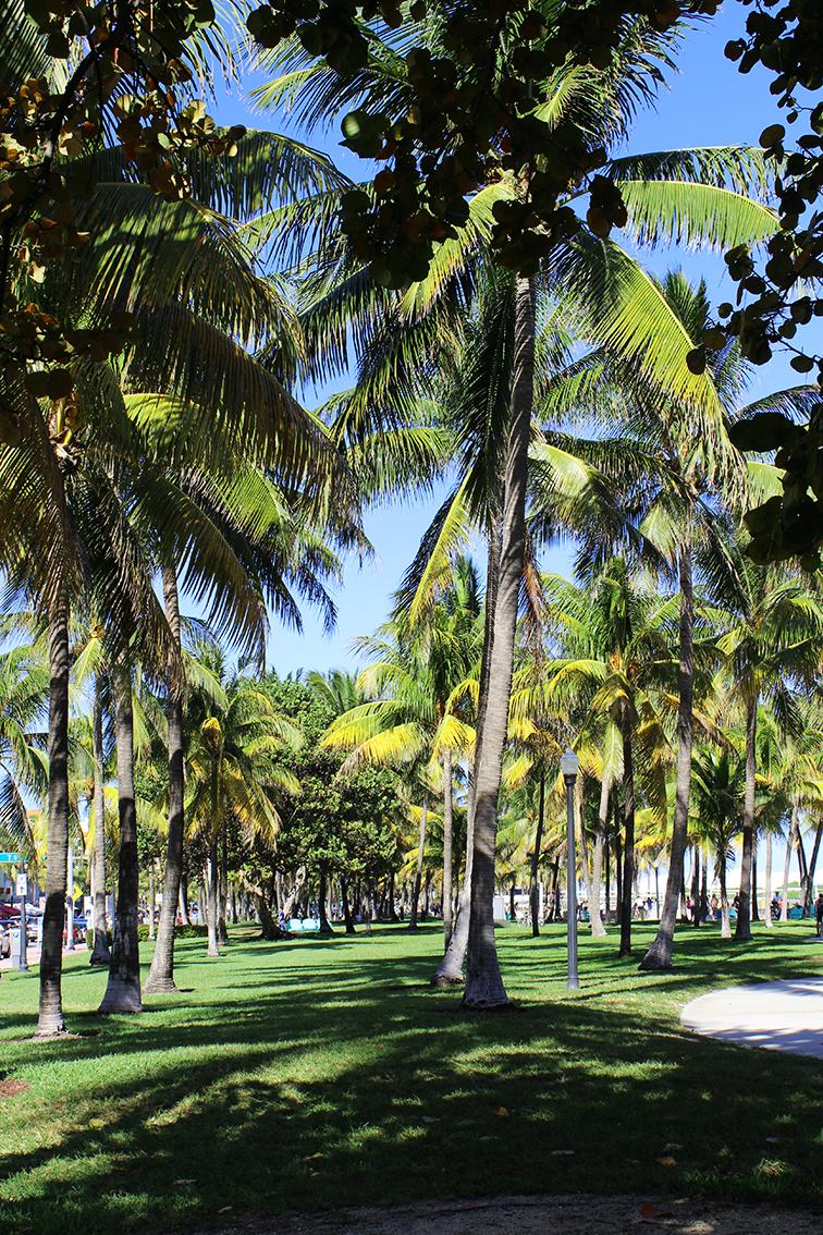 South Beach palm trees, Miami