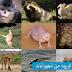 سلسلة غرائب وطرائف : أنواع غريبة من الحيوانات