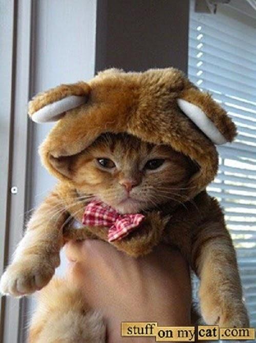 Photo chat déguisé trop mignon et drôle