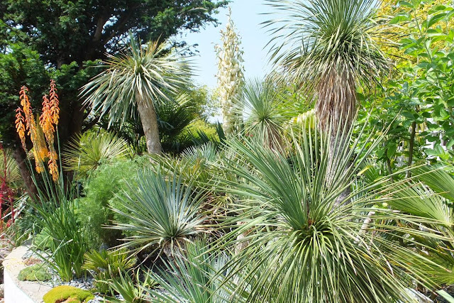Yucca and other exotics