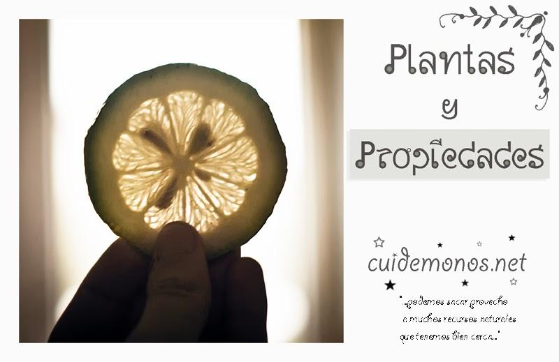 Plantas y propiedades