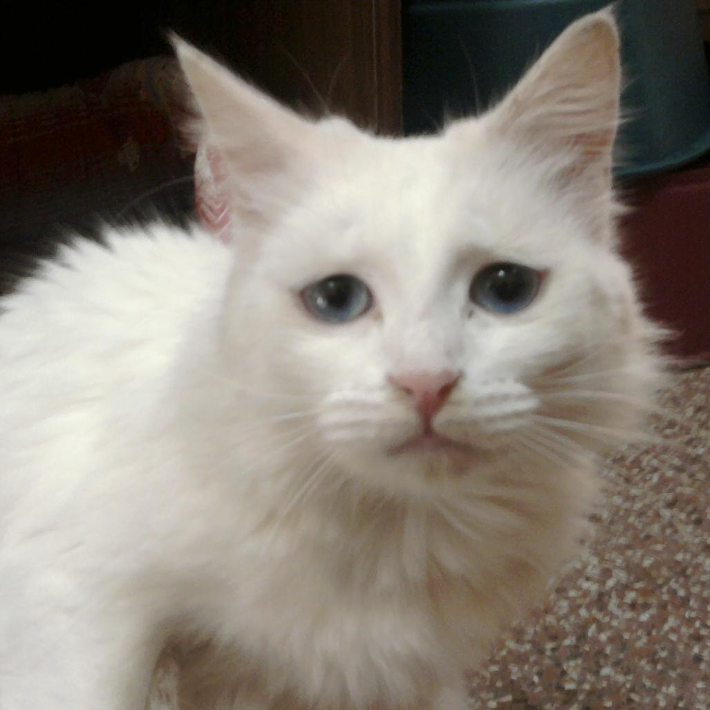 Los gatos también lloran